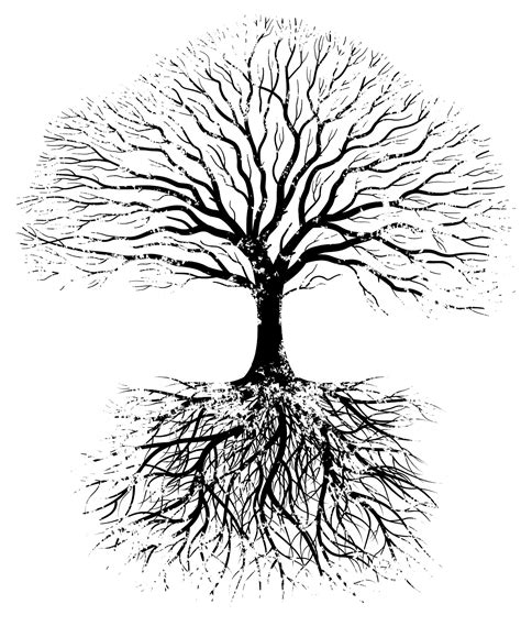 tree roots clipart black  white clipground