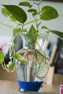 betta plant vase vases sale