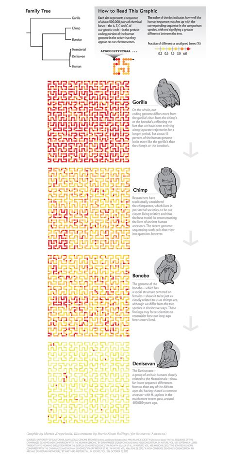 Blueprint Editor tiny genetic differences between humans and other primates