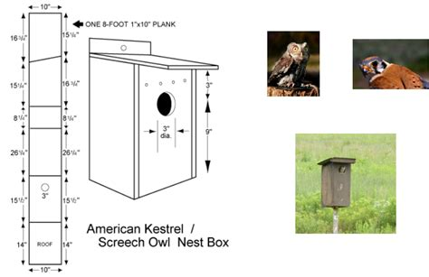 plans on how to build an owl nesting box the hungry owl project screech owl house plans