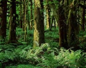 Jungle Landscape Pictures Best Photos Of Printable Rainforest Backgrounds Jungle