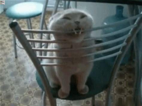 cat on chair gif cat cat gif wifflegif