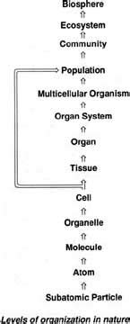 biomolecules, part 1 biology 102 course carolguze.com