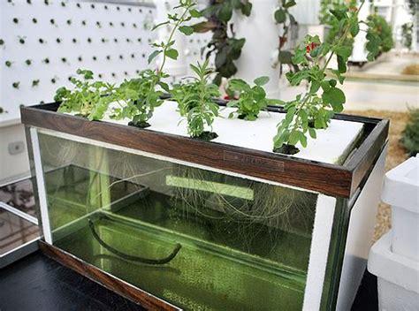 tank shows      hydroponics