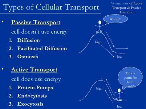 cell membrane  cell transport notes