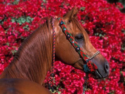 girly horse wallpaper fond d 233 cran gratuit chevaux fonds d 233 cran animaux