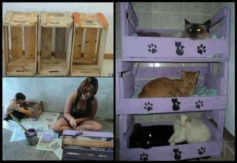 Cat Bunk Beds by Diy Cat Bunk Beds For The Pets