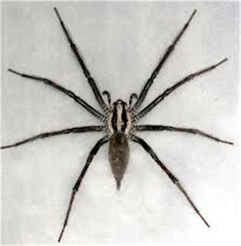 Garden Spider New York Identify The Most Common Spiders Found In Upstate Ny And