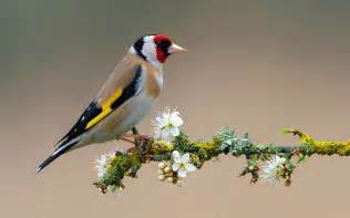 Wallpaper With Birds by Flowers For Flower Lovers Flowers And Birds Desktop