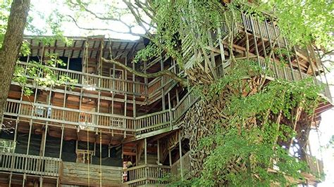 world s biggest tree house the world s largest treehouse a mansion in a tree bit rebels