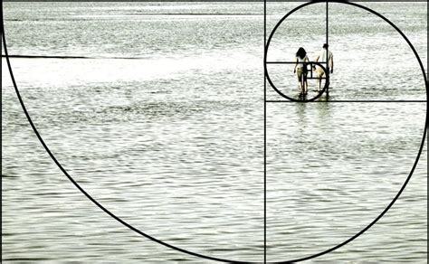 golden section photography 25 best ideas about golden ratio on pinterest