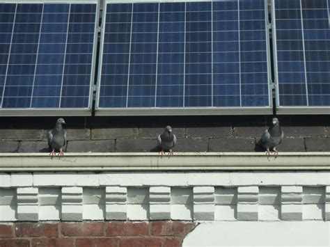 The Weekend Read 5 by The Weekend Read Five Key Questions Facing Rooftop Solar