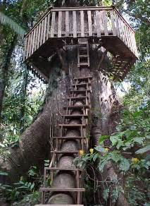 Treehouse File Treehouse Access And Roundwalk Jpg
