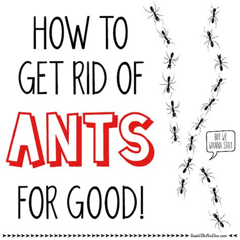 How To Get Rid Of Ants In The Bathroom by How To Get Rid Of Those Ants Inside The Fox Den