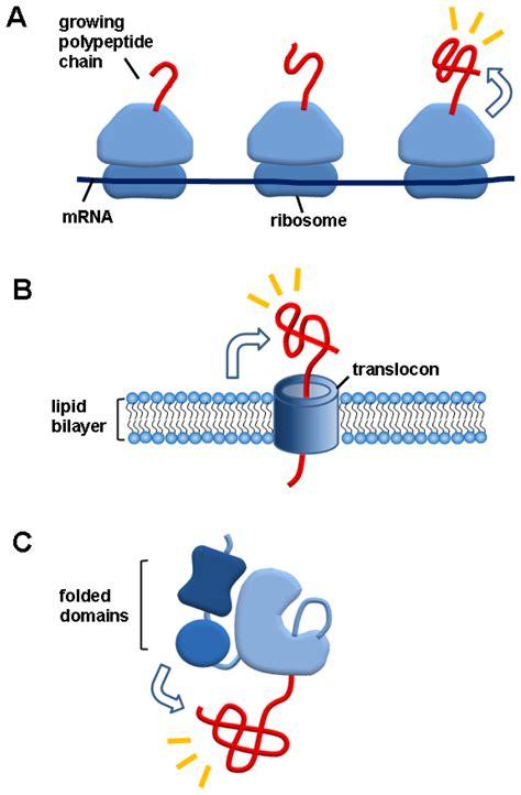 protein macromolecule ijms free text macromolecule assisted de novo