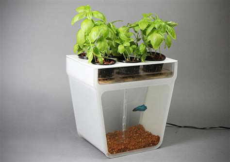 home aquaponics kit diy aquaponics effortlessly
