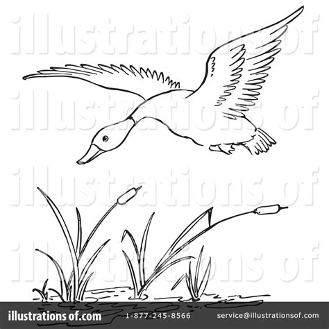 pond duck hunting clipart clipart suggest