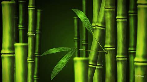 wallpaper daun bambu bamboo wallpaper 1920x1080 43695