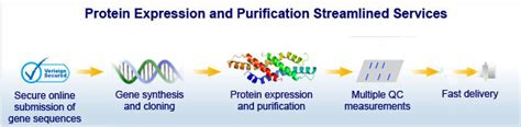 j protein expression purification china protein expression and purification services china
