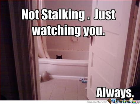 Stalking Meme - facebook stalking memes best collection of funny facebook