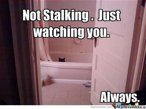 Funny Stalker Memes - stalking cat memes best collection of funny stalking cat
