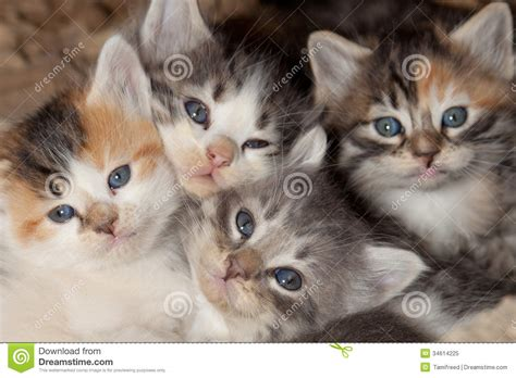kitten clutter royalty  stock photo image