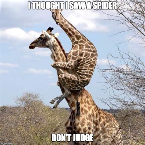 Giraffe Spider Meme - giraffe meme spider