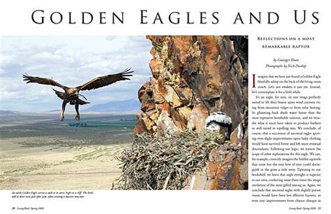 where did the golden live golden eagles and us 2009 living bird