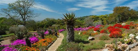 Pictures Of Kirstenbosch Botanical Gardens Kirstenbosch Botanical Gardens Cape Town