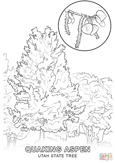 coloring pages utah utah state tree coloring page free printable coloring pages