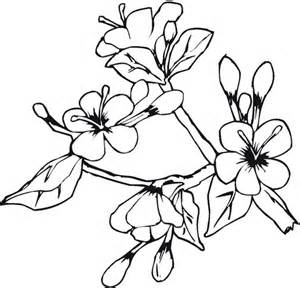coloring pages of different types of flowers batman coloring sheets types flowers coloring pages