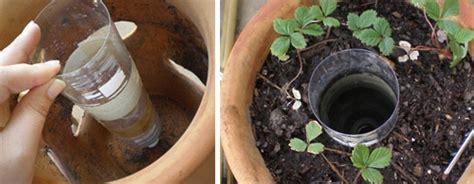 vaso per fragole fai da te fragole il trucco vaso con le tasche fiori e foglie