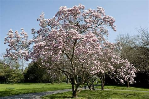 alberi sempreverdi da giardino alberi sempreverdi da giardino piante da giardino come