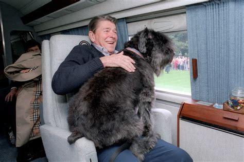 ronald reagans dog lucky presidential pet museum