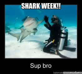 Funny Shark Memes - 1000 ideas about shark week humor on pinterest funny