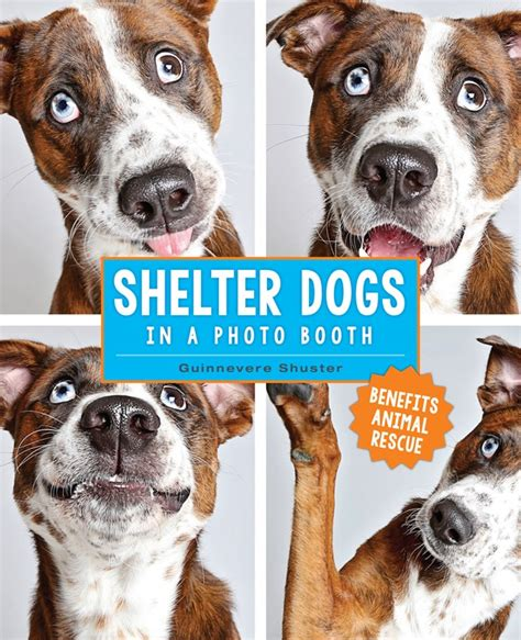 dogs in photo booth shelter dogs in a photo booth book review pet radio magazine