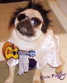 pug costume for humans humans on costumes dogs and costumes