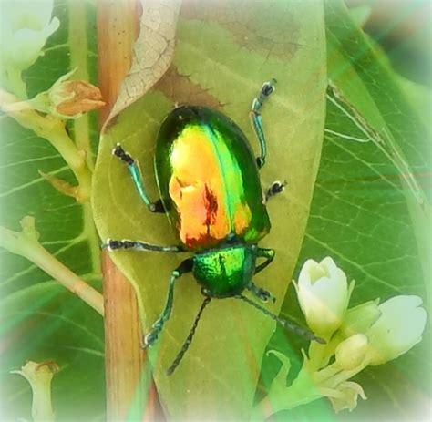 Beetle Sound Recording Introducing Lori Spiritual Ecologist Audio Recording Emanation Of Presence