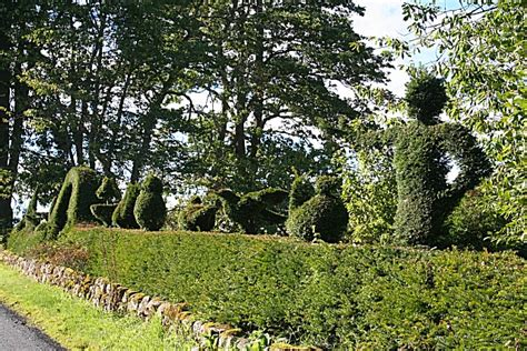 hedge topiary topiary hedge 169 burgess cc by sa 2 0 geograph