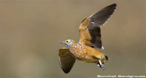 how to a to bird hunt bird in africa