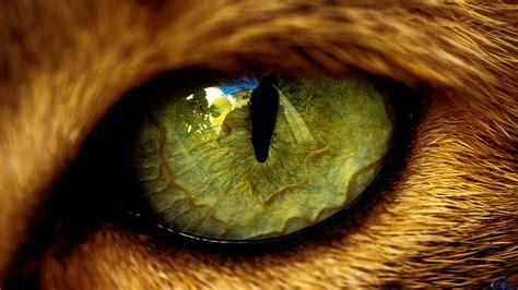 wallpaper cat eyes cat eye wallpaper 363257