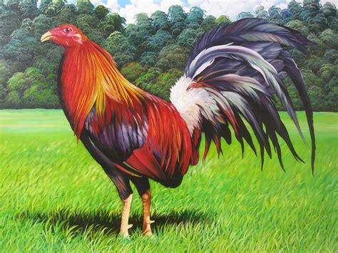 las razas de gallos finos newhairstylesformen2014 com las razas de gallos finos newhairstylesformen2014 com