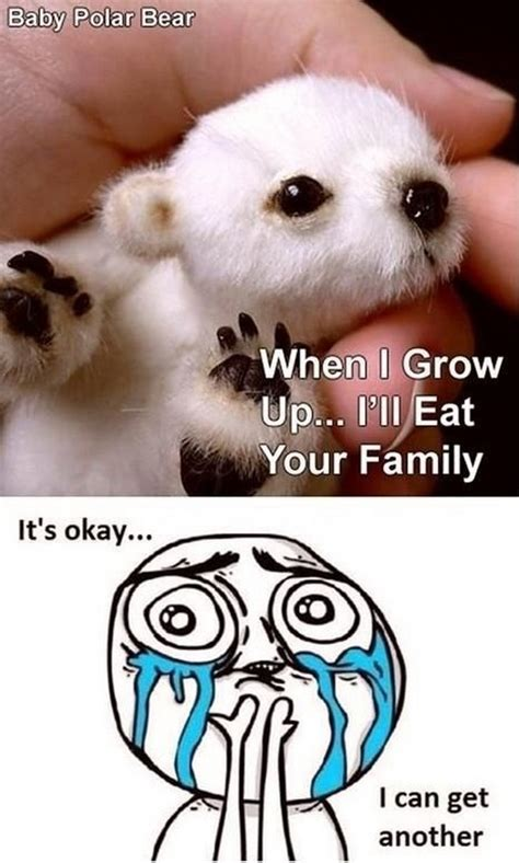 Cute Baby Animal Memes - cuteness overload baby polar bear dump a day