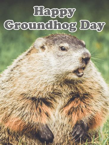 groundhog day birthday yay it s cloudy groundhog day card birthday