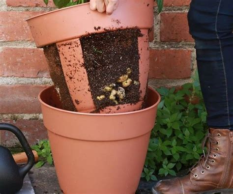City Pickers Planter by 17 Best Ideas About Potato Planter On