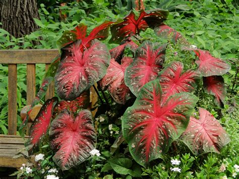garden flowers san antonio garden color not just for flowers san antonio express news