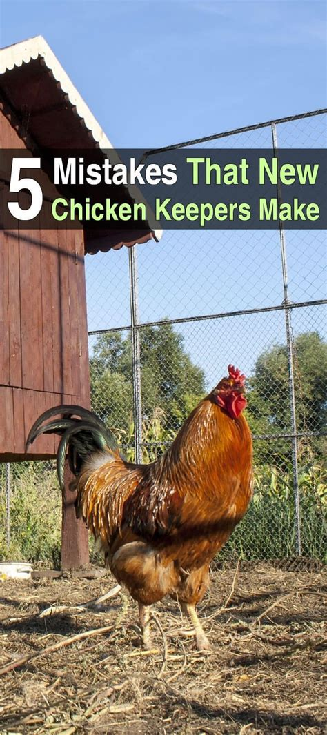 backyard poultry raising backyard poultry raising 28 images backyard chicken