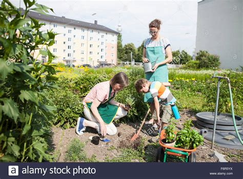 Family Working Together In Vegetable Garden Stock Photo Family Vegetable Garden