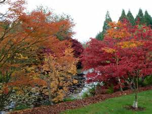 file fall colours at vandusen botanical garden jpg