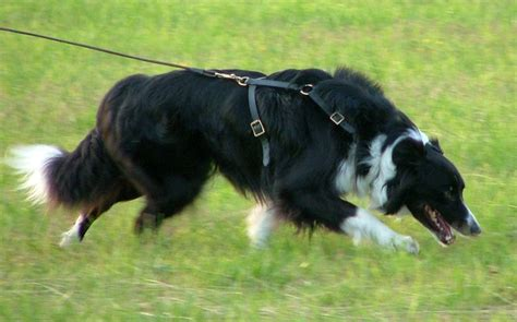 how to tracking dogs tracking deltaone canines in the west midlands coventry areas pet